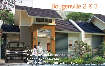 bougenville 41/120